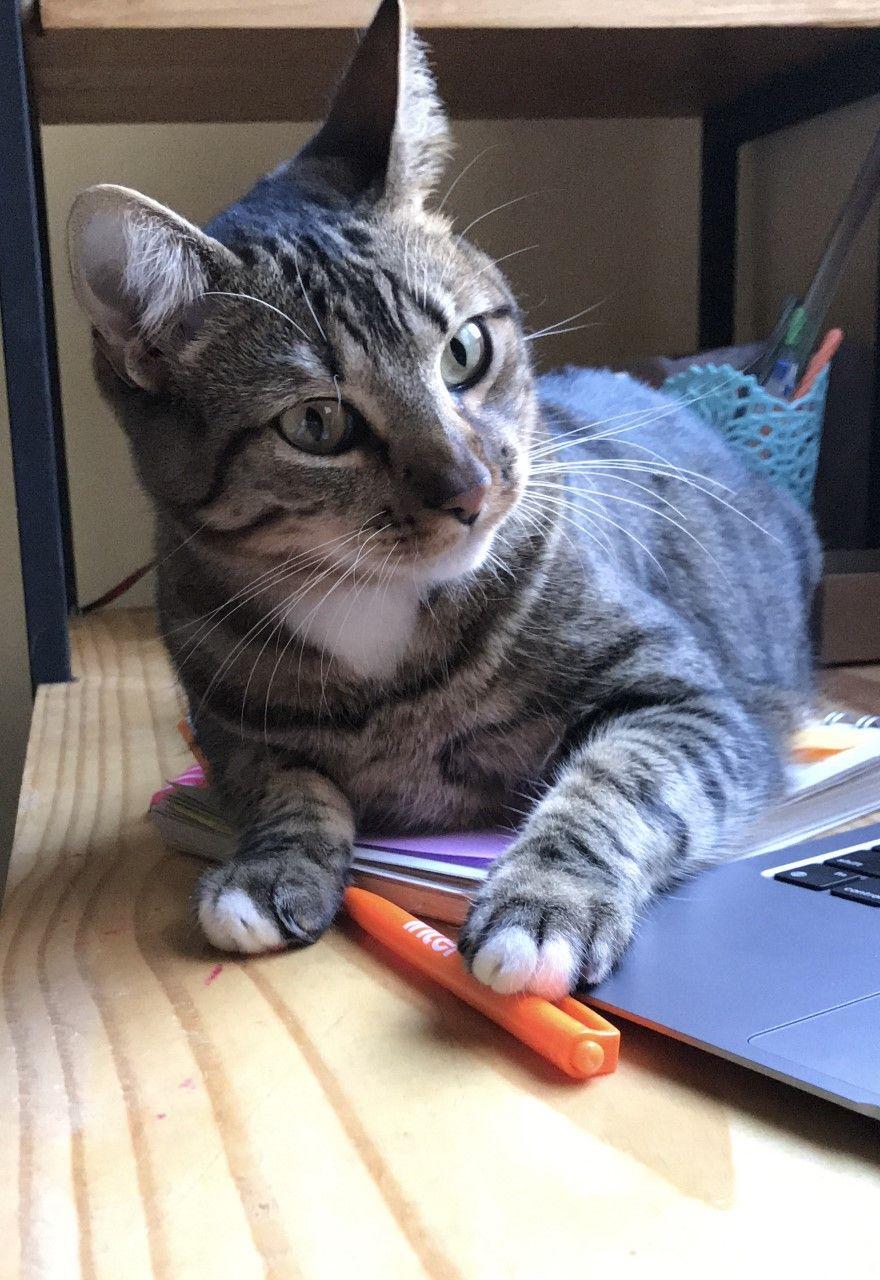 Foto mostra gatto segurando uma caneta do Inter com as patas.