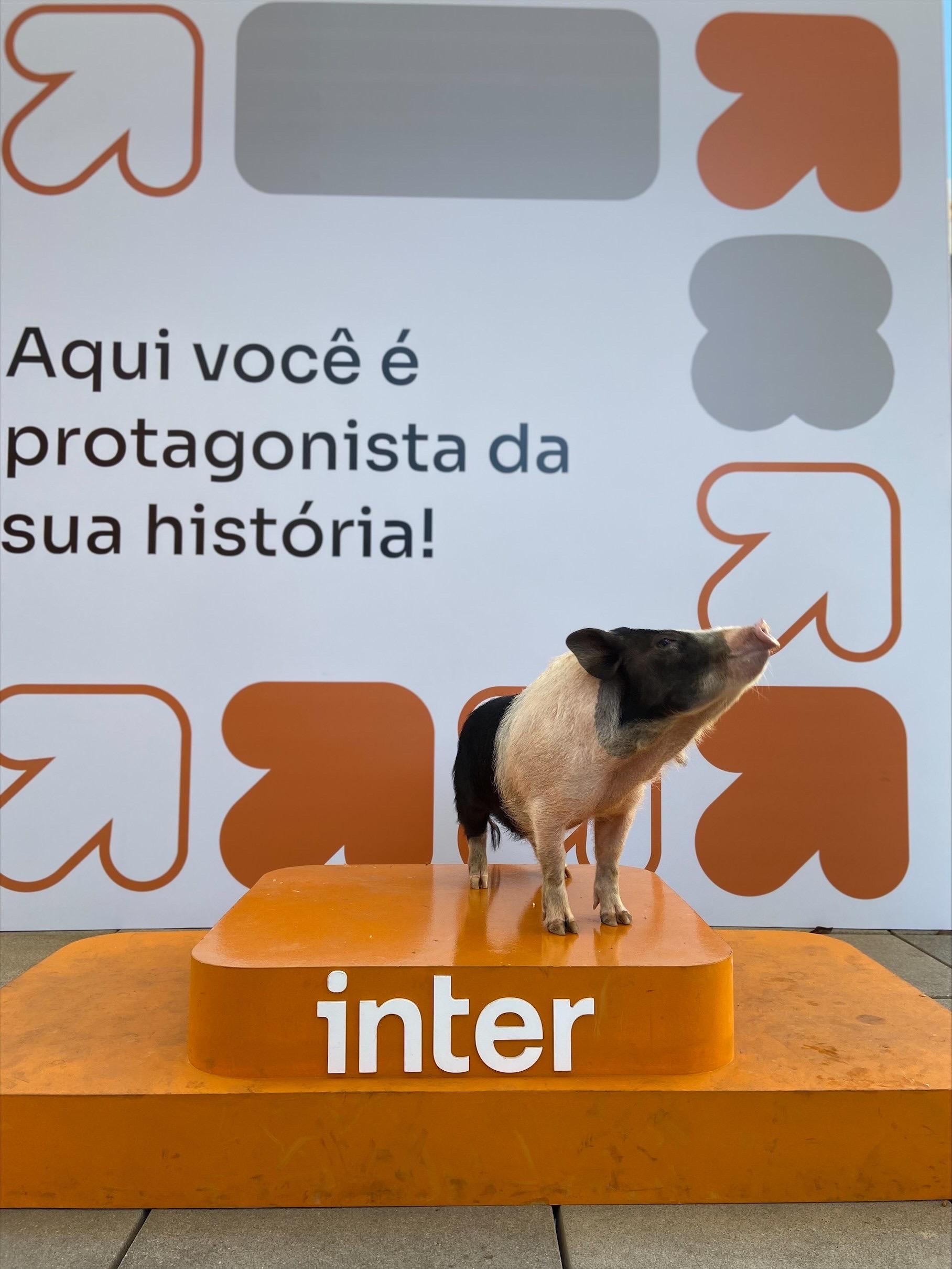 Foto mostra porquinho sobre um pedestal no primeiro plano com um background da semana de carreiras do Inter ao fundo.
